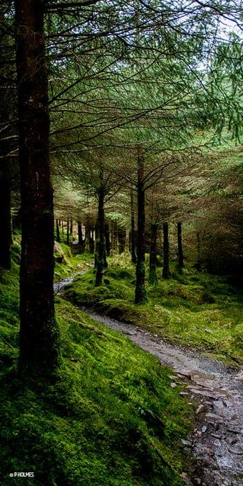 Ballyhoura forest trails
